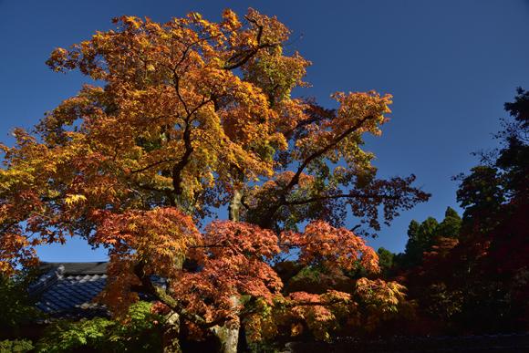 秋色の湖東三山_e0164563_15321560.jpg