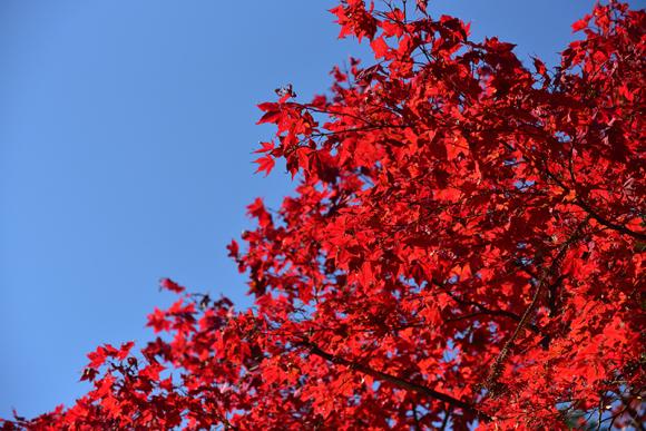 秋色の湖東三山_e0164563_15323090.jpg