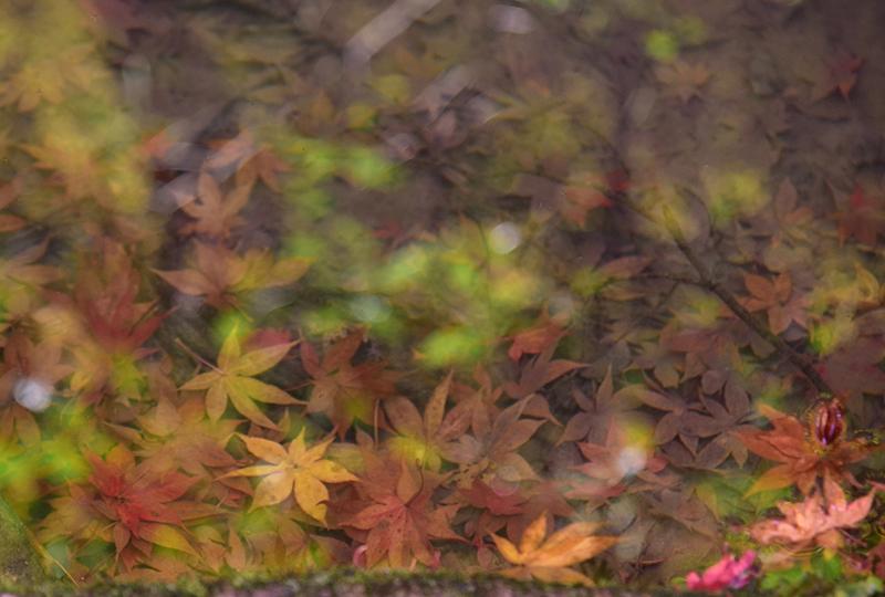 秋色の湖東三山_e0164563_15323098.jpg
