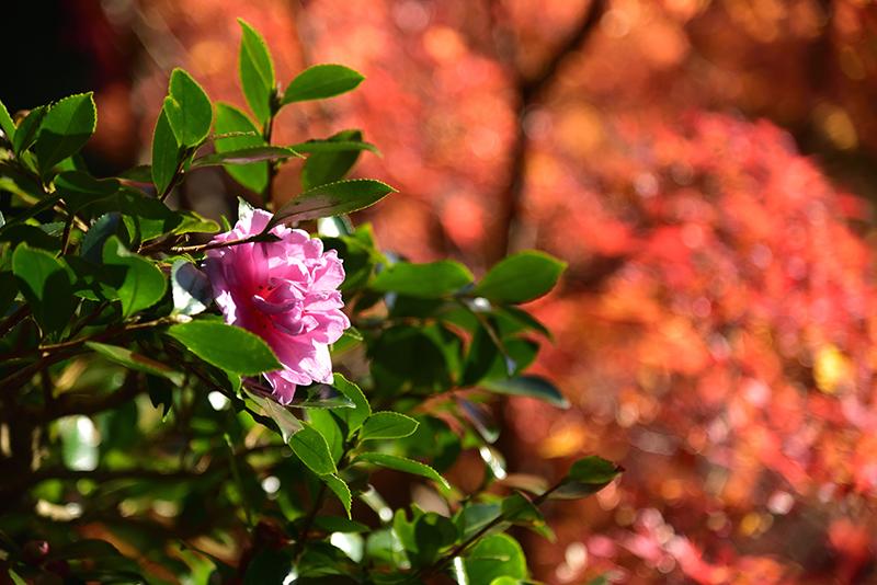 秋色の湖東三山_e0164563_15323109.jpg