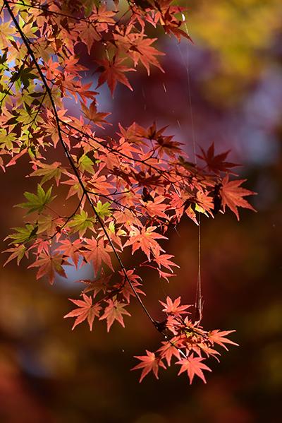 秋色の湖東三山_e0164563_15323120.jpg