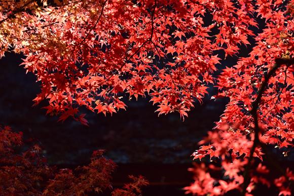 秋色の湖東三山_e0164563_15364881.jpg