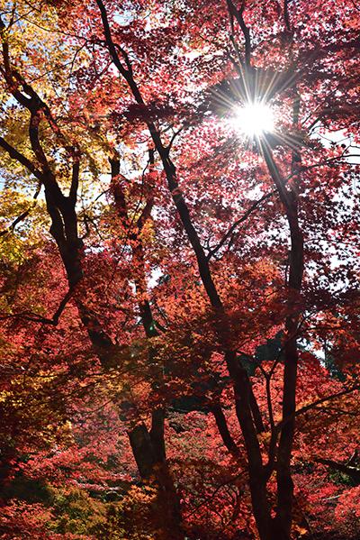 秋色の湖東三山_e0164563_15434080.jpg
