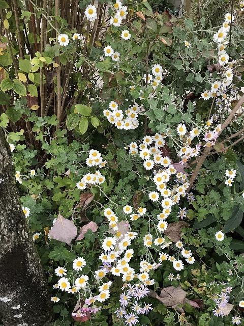 久しぶりの庭掃除_b0214473_17593113.jpg