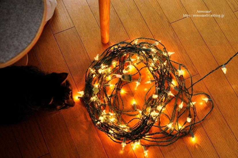 Christmas tree 1122の日_e0359481_13554367.jpg