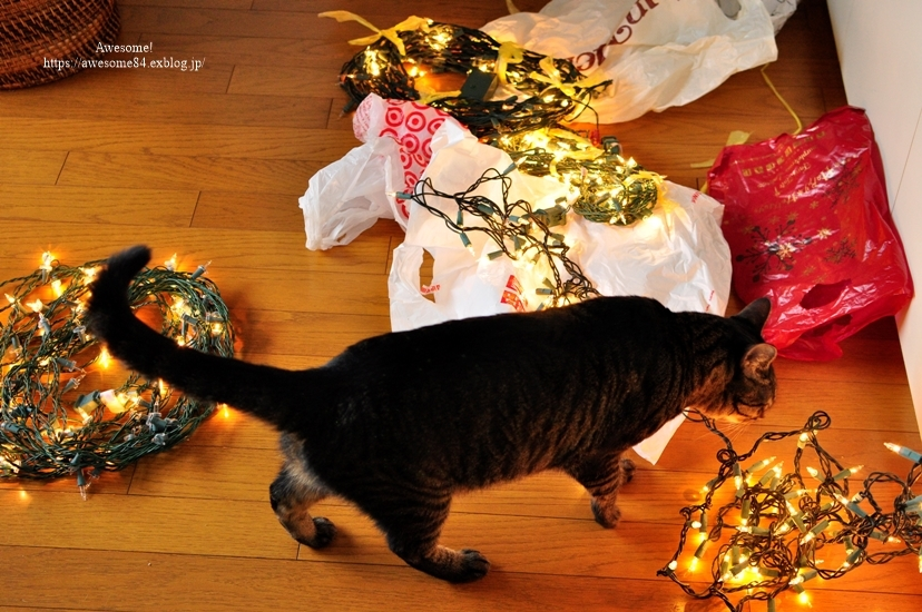 Christmas tree 1122の日_e0359481_13555438.jpg