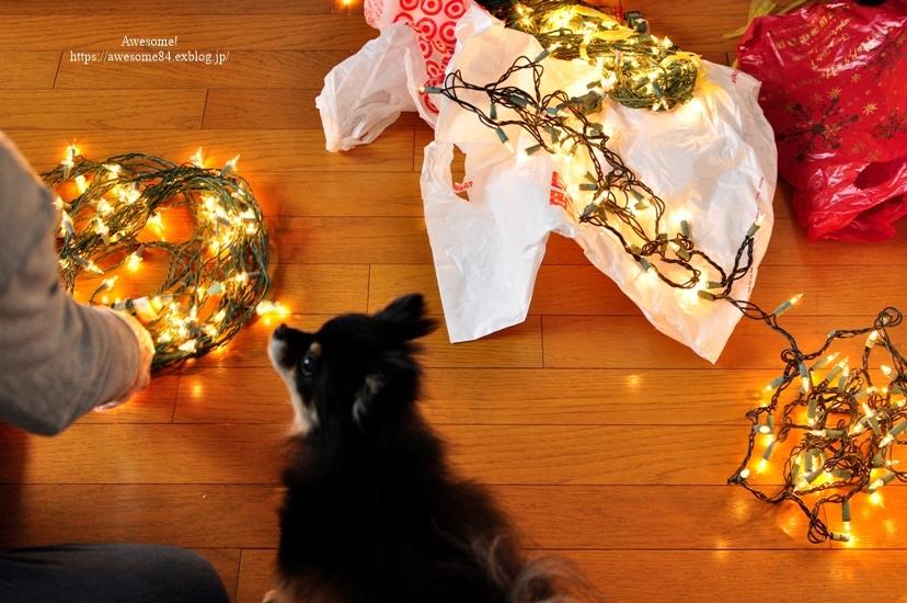 Christmas tree 1122の日_e0359481_13560794.jpg