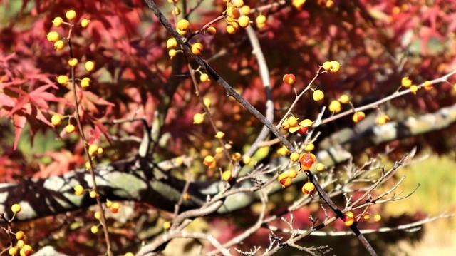 藤田八束の鉄道写真@青森空港でのお話、もみじ山の美しい秋、青森の素晴らしい秋と素敵な仲間で秋を堪能、素敵な秋をありがとう感謝しています_d0181492_18500383.jpg