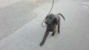 犬は大らかに育てよう!2の⑦_b0084194_18042894.jpg