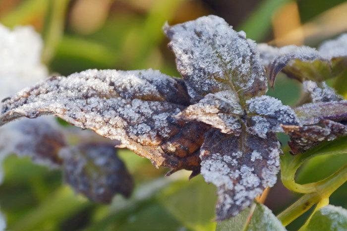 寒い朝_d0162994_08562037.jpg
