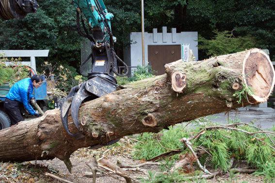神社の老木伐採_b0145296_15465787.jpg
