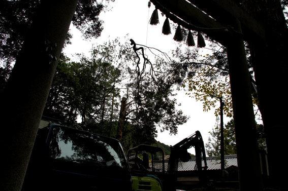 神社の老木伐採_b0145296_15465961.jpg