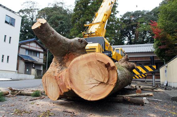 神社の老木伐採_b0145296_15470219.jpg