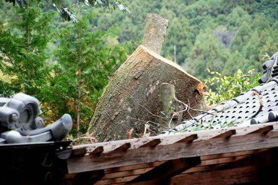 神社の老木伐採_b0145296_15470360.jpg