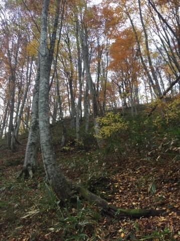 秋のトレッキング  雲竜の滝_e0115904_12114881.jpg