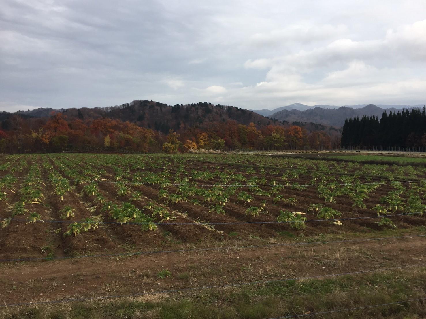 秋のトレッキング  雲竜の滝_e0115904_12260527.jpg