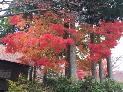 秋のトレッキング  雲竜の滝_e0115904_12260566.jpg