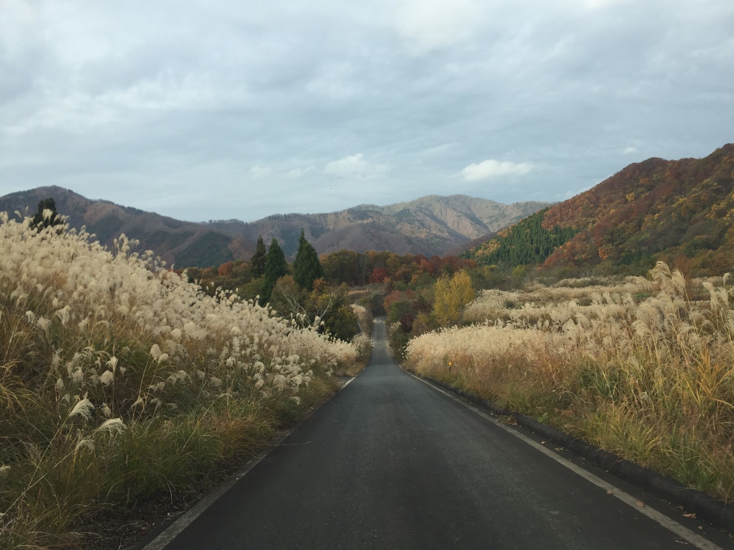 秋のトレッキング  雲竜の滝_e0115904_12323759.jpg