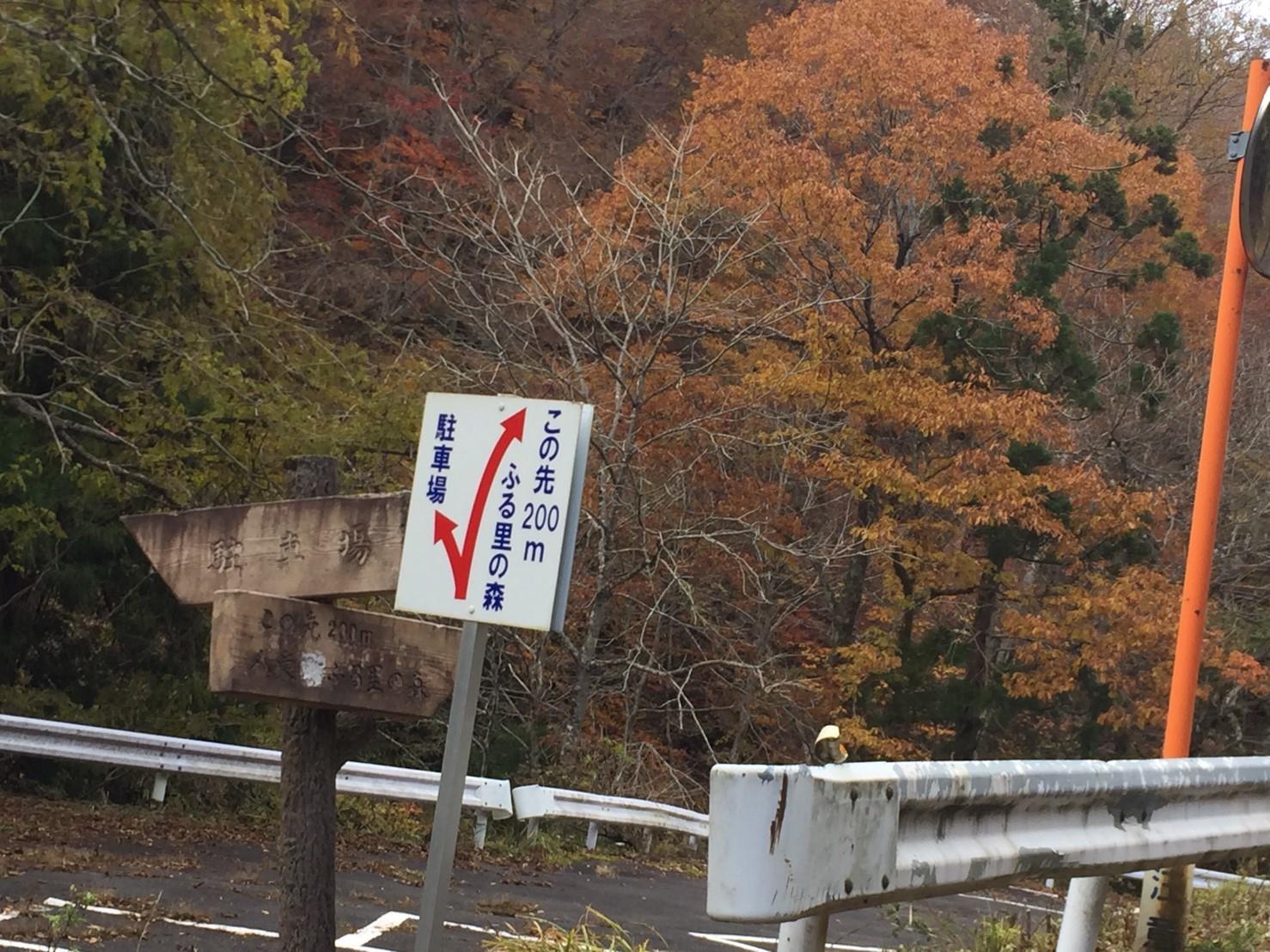 秋のトレッキング  雲竜の滝_e0115904_12323762.jpg