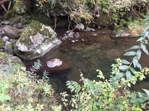 秋のトレッキング  雲竜の滝_e0115904_12364490.jpg