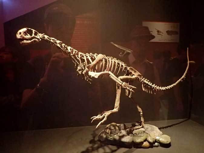 恐竜博2019:「最も奇妙な恐竜」チレサウルス、アンキオルニス~ペリット(吐き戻し)の化石_b0355317_20540430.jpg