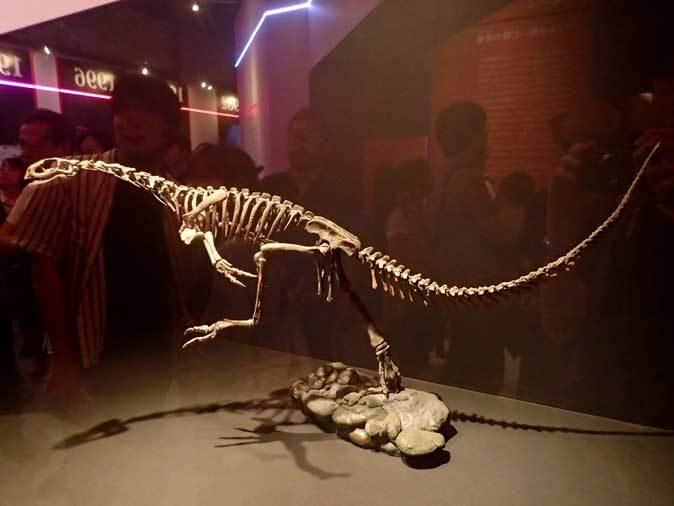 恐竜博2019:「最も奇妙な恐竜」チレサウルス、アンキオルニス~ペリット(吐き戻し)の化石_b0355317_21020171.jpg