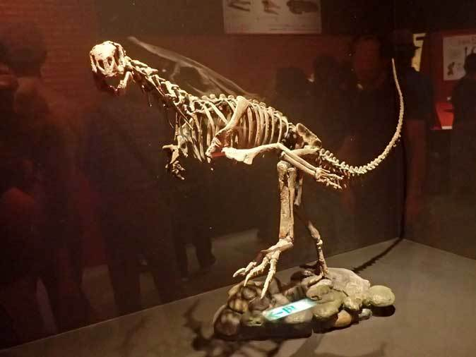 恐竜博2019:「最も奇妙な恐竜」チレサウルス、アンキオルニス~ペリット(吐き戻し)の化石_b0355317_21302835.jpg