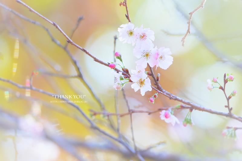 枯れ木に花を咲かせましょう_c0211922_19460522.jpg