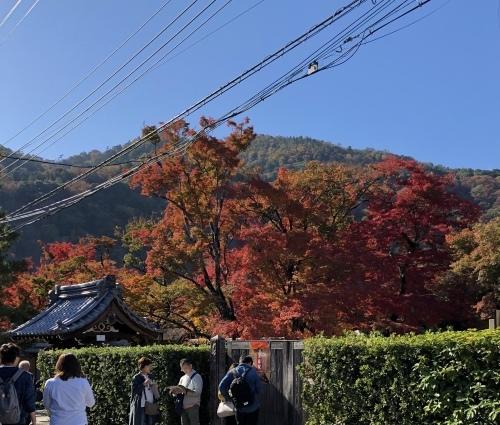 嵐山も紅葉真っ盛り〜!_a0197730_16091652.jpeg