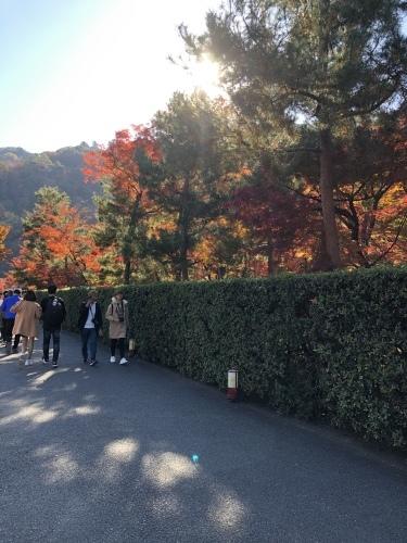 嵐山も紅葉真っ盛り〜!_a0197730_16093974.jpeg