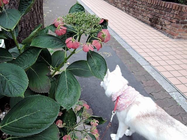 散歩屋日誌【23】_c0062832_15104766.jpg