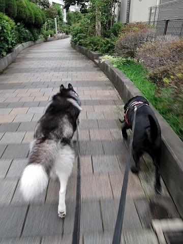 散歩屋日誌【23】_c0062832_15104834.jpg