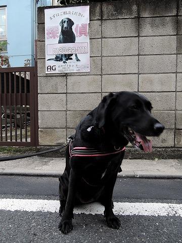 散歩屋日誌【23】_c0062832_15114557.jpg