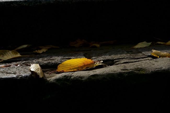 秋色を愉しむ_d0264733_14332501.jpg