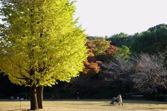 秋色を愉しむ_d0264733_14335542.jpg