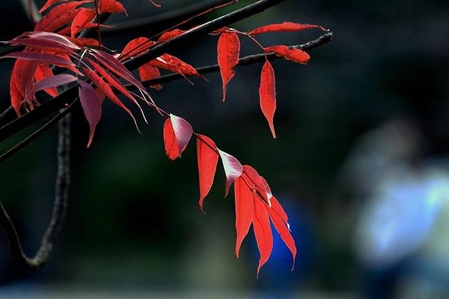 秋色を愉しむ_d0264733_14340625.jpg