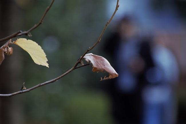 秋色を愉しむ_d0264733_18035903.jpg