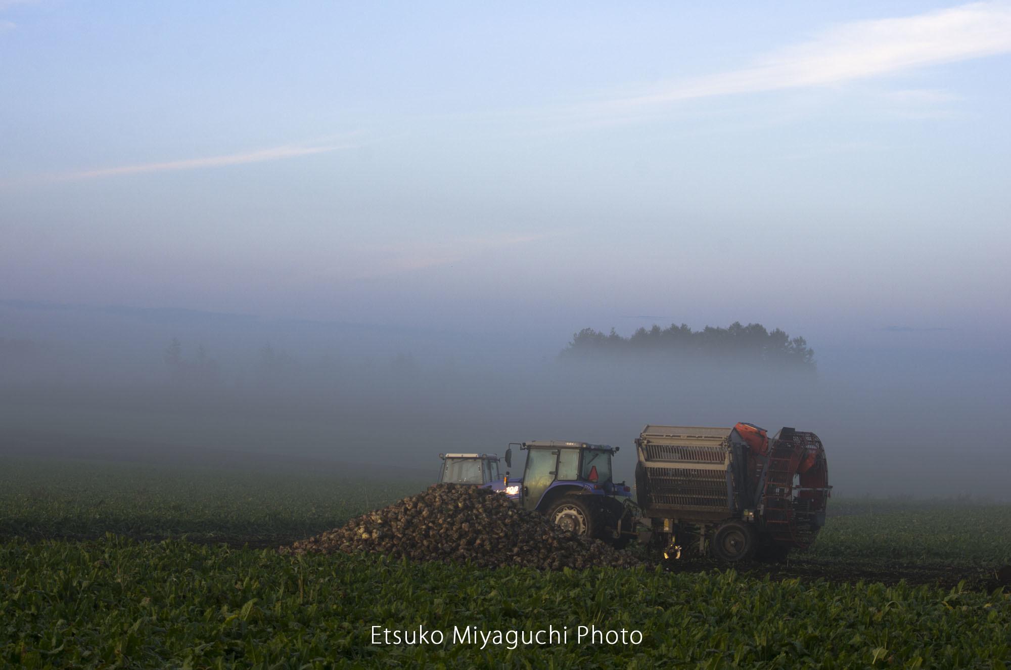 ビートの収穫_f0152939_04361507.jpg