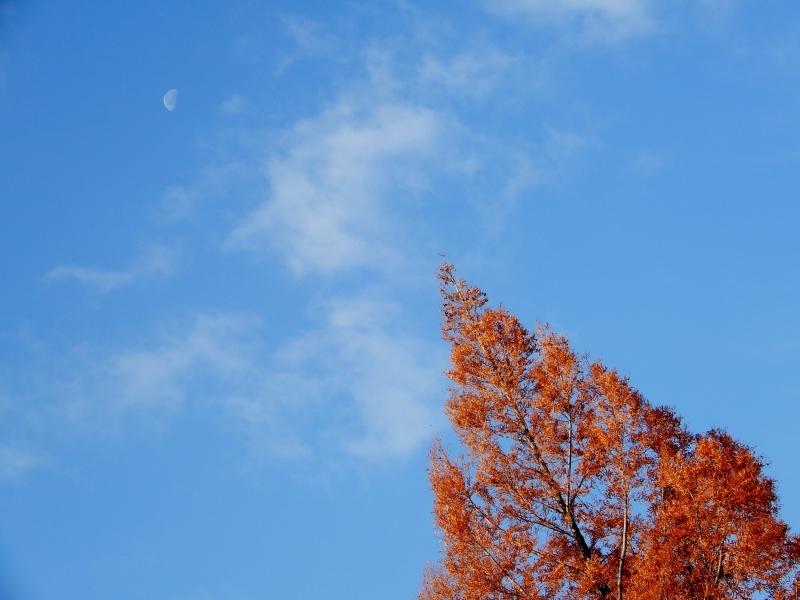 エルメスのツリー風に* metasequoia d\'Hermès?_f0374041_07513082.jpg