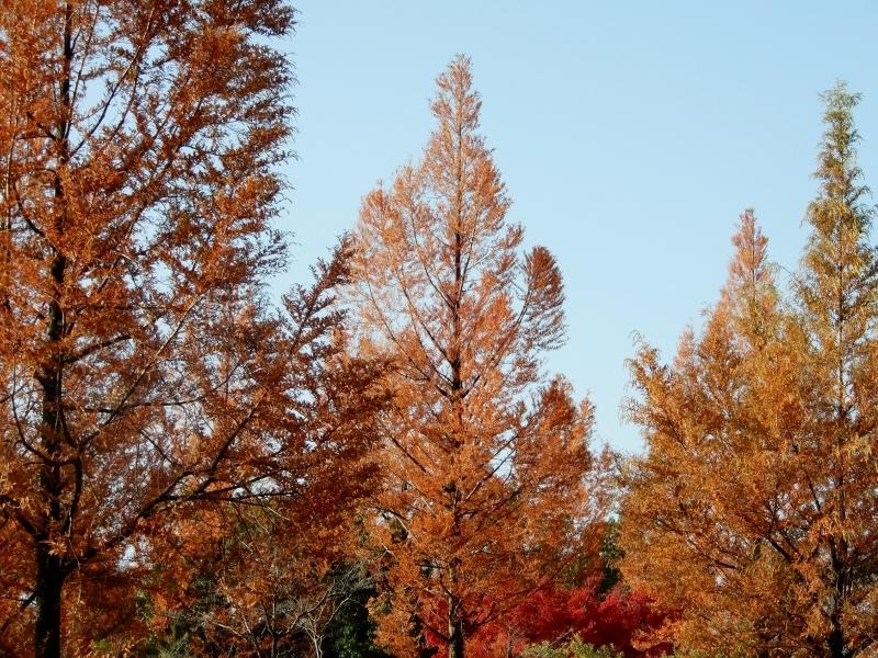 エルメスのツリー風に* metasequoia d\'Hermès?_f0374041_07564102.jpg