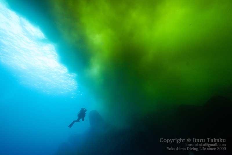 大隅諸島・硫黄島の海 -サンゴ調査より-_b0186442_19301532.jpg