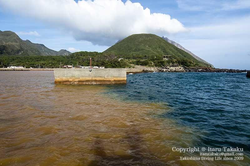 大隅諸島・硫黄島の海 -サンゴ調査より-_b0186442_20390975.jpg