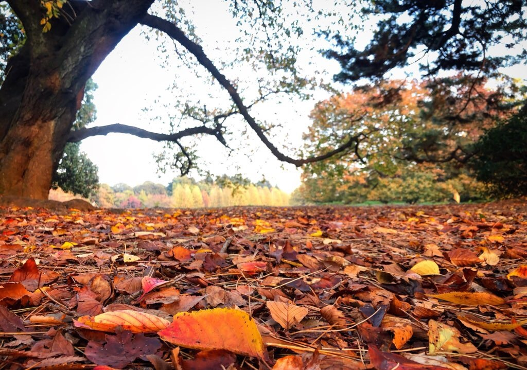 暖暖落ち葉の道をゆく_e0071652_10093883.jpeg