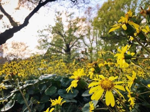 暖暖落ち葉の道をゆく_e0071652_10094643.jpeg