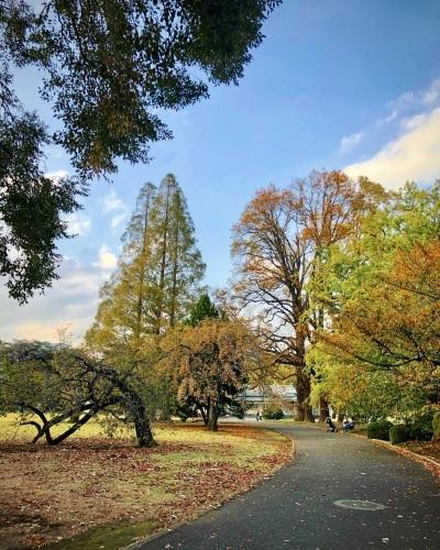 暖暖落ち葉の道をゆく_e0071652_10101137.jpeg
