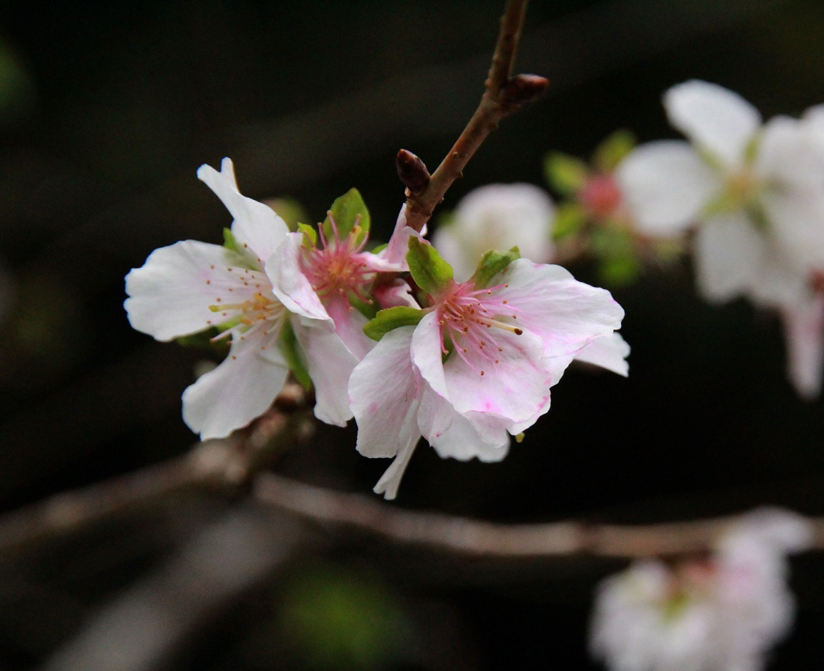 花の御寺・長谷詣・11月19日_a0107574_17190764.jpg