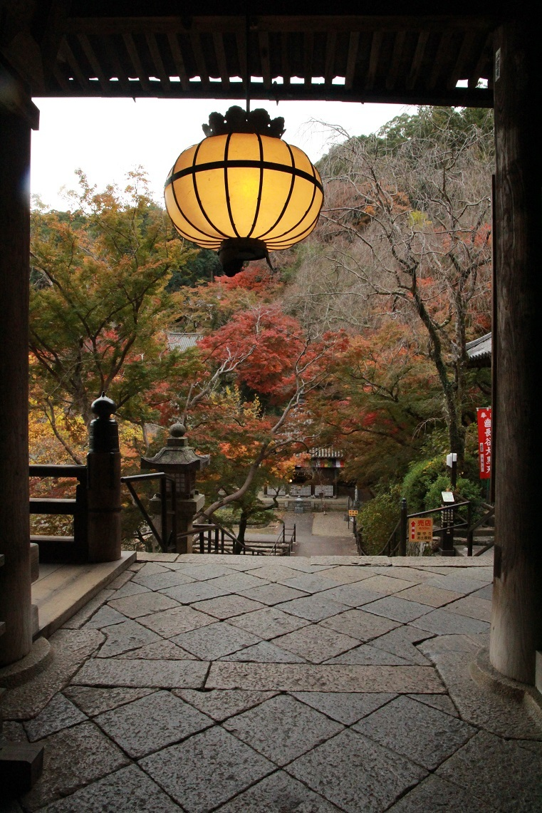 花の御寺・長谷詣・11月19日_a0107574_17202406.jpg