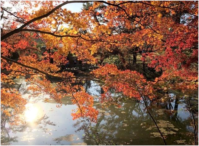 < 京都府立植物園 >_c0036080_16481933.jpg