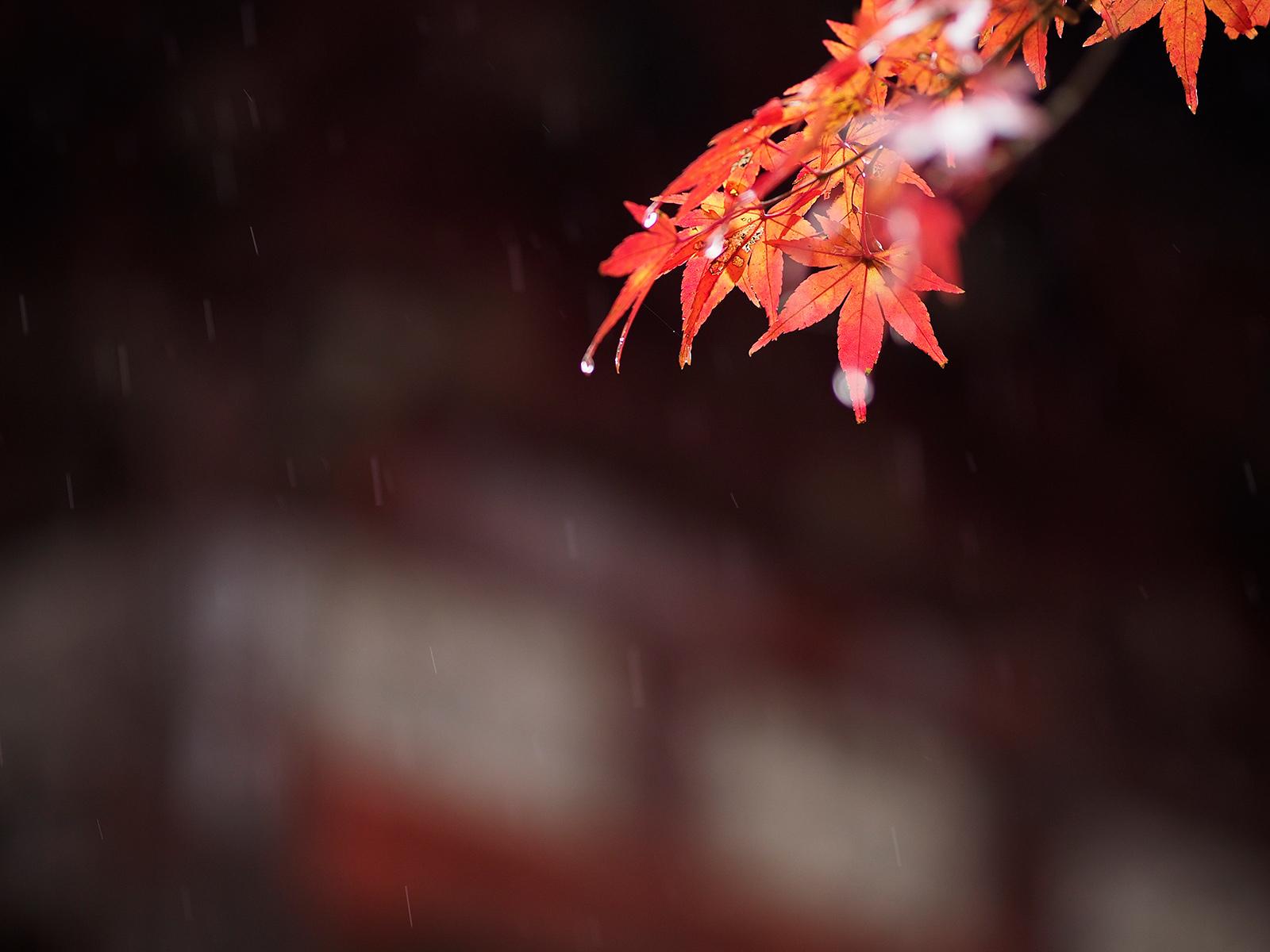 秋雨_f0121181_03284602.jpg
