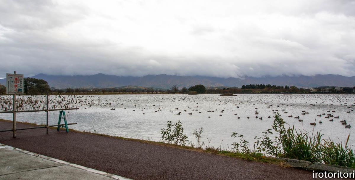 カモの湖  2019/11/21_d0146592_00172975.jpg
